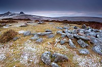 View towards Haytor Rocks  Dartmoor National Park  Devon  England