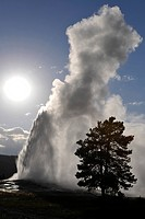 Old Faithful feyser eruption, Upper Geyser Basin, geothermal springs in Yellowstone National Park, Wyoming, United States of America, USA