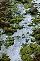 Stream with moss and crow and reflective water