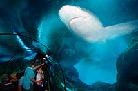 Aquarium with Sharks, Loro Parque, Puerto de la Cruz, Tenerife, Canary Islands, Spain