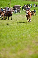Bull race, Haunshofen, Wielenbach, Upper Bavaria, Germany
