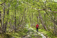 Hiker, Abisko National Park, Lapland, Northern Sweden, northern Sweden, Sweden