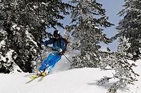 Skier going downhill, ski tour to Duerrnbachhorn, Reit im Winkl, Chiemgau, Upper Bavaria, Germany, Europe