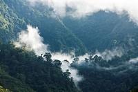 Rainforest of Tapanti National Park, Costa Rica