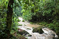 Lowland rainforest, Braulio Carrillo National Park, Costa Rica, Central America