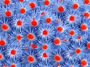 blue flowers for decoration over background