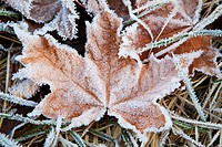 Close_up of leaf covered with frost