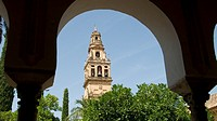 Bell tower of Cordoba Cathedral seen from the Patio de los Naranjos courtyard of the old Mosque  Andalusia  Spain