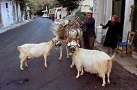 Man loading a donkey, Lassithi Plateau 840mts , Crete, Greece.