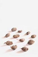 Indian spice , brown Cardamom pods Elaichi Elettaria cardamom on white background