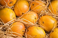 Fruit , Alphonso mango kept for ripen in dry grass