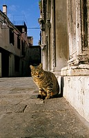 CAT SITTING ON ROAD, VENICE