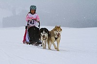 Girl sledging with dog sled at a race, Krung, Bad Mitterndorf, Styria, Austria, Europe