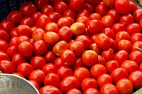 Vegetable , red tomatoes for sale