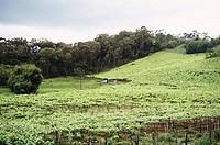 Plantation, River Brazil