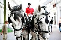 Wedding carriage, white horses, coachman