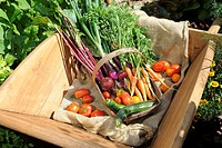 SUMMER VEGETABLE HARVEST WOODEN TRUG IN WOODEN WHEELBARROW WITH BEETROOT CARROTS TOMATOES COURGETTES AND ONIONS