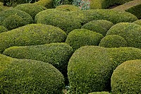 HAND_CLIPPED BUXUS IN THE OVERHANGING GARDENS OF MARQUEYSSAC DORDOGNE FRANCE