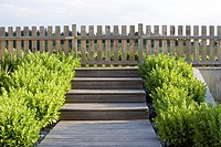 WOODEN STAIRCASE LEADING TO FENCE BORDERED BY BUXUS