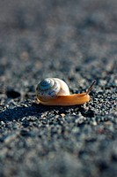 Snail on tarmac