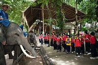 Thai Elephants Conservation Centre in Lampang is located in the Thung Kwian forest park in Hang Chat district, about 32 kilometers from town on the ro...
