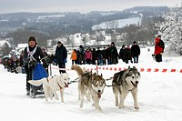Sled dog race in Liebenscheid, Rhineland-Palatinate, Germany, Europe
