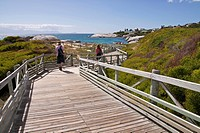 Wooden walkways for tourists, Table Mountain National Park, Simon's Town, Western Cape Province, South Africa