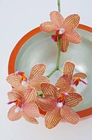 Orchid blossoms in bowl with water