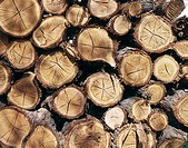view of a pile of sawn logs showing the pattern and texture