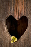 Heart shape cut in wooden door, close up