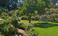 Beautiful Rose Garden at the Huntington Library and Botanical Gardens.