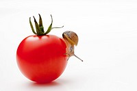 snail with tomato
