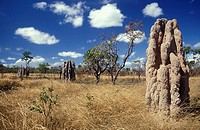 Huge termite mounds in the Northern Territory