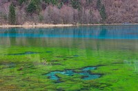 Lake in Jiuzhaigou National Park, China