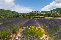 Lavender fields, Banon, France