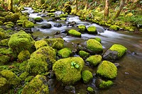 Mossy rocks along a creek