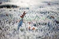 Frost on grass and autumn leaves