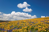 Wildflowers in a hilly meadow