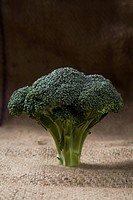 A shot of a fresh green broccoli