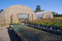 Greenhouse on organic flower farm, Humboldt County, California