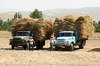 Crops on ZIL trucks during harvest in Fergana Valley, Kyrgyzstan
