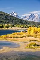 Autumn foliage in the Grand Teton mountain range