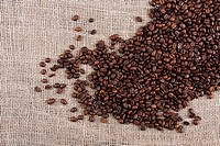 roasted arabica coffee beans on burlap sack