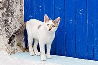 Europe, Greece, Cyclades, Santorini, Cat at doorway staring