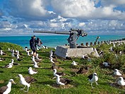 Laysan Albatross (Phoebastria immutabilis), Midway Atoll National Wildlife Refuge, Eastern Island, Hawaii, USA