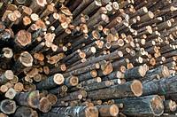 Huge pile of softwood logs at sawmill, Eureka, California