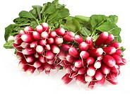 PINK RADISH raphanus sativus AGAINST WITH BACKGROUND