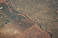 Olive fields viewed from the air balloon, Antequera, Malaga, Andalusia, Spain