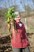 Woman gardener showing a bunch of Parsnips which have just been dug up