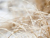 USA, New York State, Rockaway Beach, frozen grass, close_up